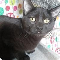Adopt A Pet :: Slim - Valley Park, MO