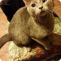 Adopt A Pet :: Sky - Hockessin, DE