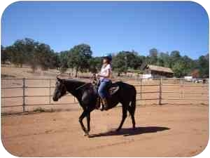 Quarterhorse for adoption in El Dorado Hills, California - Coco