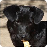 Adopt A Pet :: Sweetie Pie - Pending! - kennebunkport, ME