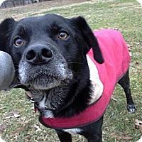 Adopt A Pet :: Duke - Marietta, GA