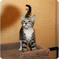 Adopt A Pet :: Toots - Farmingdale, NY