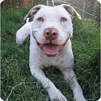Adopt A Pet :: Peanut - Lodi, CA