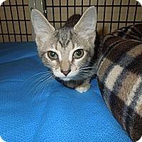 Adopt A Pet :: Erie - Medina, OH