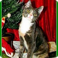 Adopt A Pet :: Princess Tiana - Orlando, FL