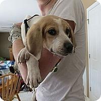 Adopt A Pet :: Finnegan - Novi, MI