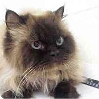 Adopt A Pet :: Twyla - Arlington, VA