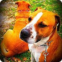 Adopt A Pet :: Uno - Spring Branch, TX