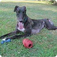 Adopt A Pet :: Flora - Chagrin Falls, OH