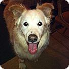 Adopt A Pet :: Mory