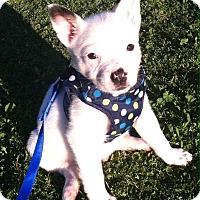 Adopt A Pet :: Rango - Phoenix, AZ