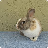 Adopt A Pet :: Cody - Bonita, CA