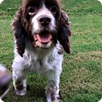 Adopt A Pet :: Rugby - Alpharetta, GA