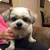 Adopt A Pet :: Brutua - Oceanside, CA