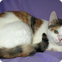 Adopt A Pet :: Azelda - Powell, OH
