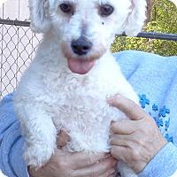 Adopt A Pet :: Jarnia - Crump, TN