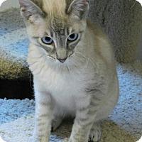 Adopt A Pet :: Reagan - Davis, CA