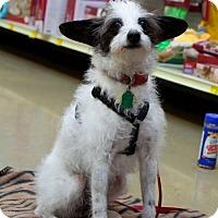 Adopt A Pet :: Heidi - Great Bend, KS