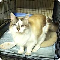 Adopt A Pet :: Miles - Byron Center, MI