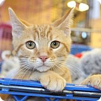 Adopt A Pet :: Travis - Louisville, KY