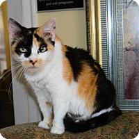 Domestic Mediumhair Cat for adoption in Buford, Georgia - Gretal