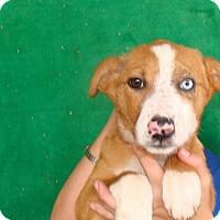 Adopt A Pet :: Genie - Oviedo, FL