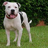 Adopt A Pet :: LT - Seattle, WA