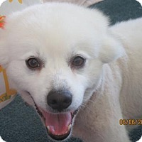 Adopt A Pet :: Alaska of Ohio - Lindsey, OH
