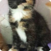 Adopt A Pet :: Adopt me! - Fayette City, PA