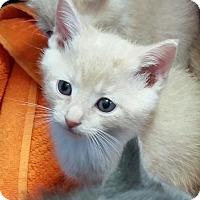 Adopt A Pet :: Truffle - Greenville, NC