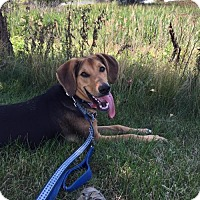 Adopt A Pet :: Quincy - Bloomingdale, IL