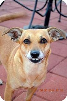 Dachshund Mix Dog for adoption in Lodi, California - Margie
