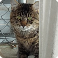 Adopt A Pet :: Poly - Grants Pass, OR