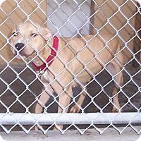 Adopt A Pet :: Sugar - Fall River, MA