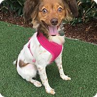Adopt A Pet :: Mia - Rancho Palos Verdes, CA