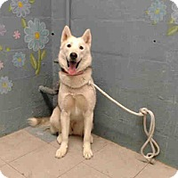 Adopt A Pet :: A5016632 is at Lancaster - Beverly Hills, CA