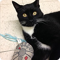 Adopt A Pet :: Hunter - Rockaway, NJ
