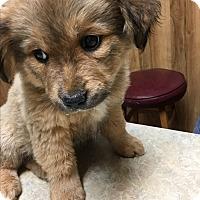 Adopt A Pet :: Lucy - Mexia, TX