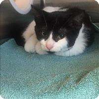 Adopt A Pet :: Dylan - Maple Ridge, BC