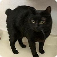Adopt A Pet :: Jack - Glendale, AZ
