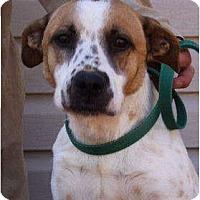 Adopt A Pet :: Lulu - Godfrey, IL