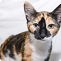 Adopt A Pet :: Gracie - New York, NY