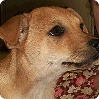 Adopt A Pet :: Shelton - Brattleboro, VT