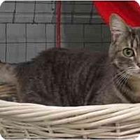 Adopt A Pet :: Mandy - Mission, BC