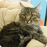 Adopt A Pet :: Brad - Reston, VA