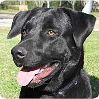 Adopt A Pet :: Bacon - Kingwood, TX