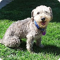 Adopt A Pet :: PARKER - Mission Viejo, CA