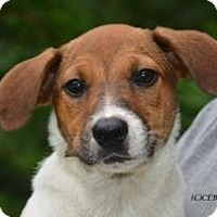 Adopt A Pet :: Cydney - Marlton, NJ