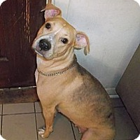 Adopt A Pet :: Shelley - Miami, FL