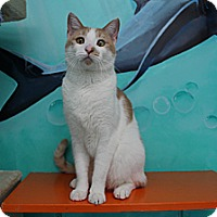 Adopt A Pet :: Paulie - Newport Beach, CA
